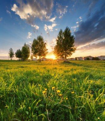 Naklejka zielona trawa na tle pięknego zachodu słońca