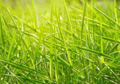 Naklejka Zielona trawa w tle