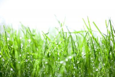 Naklejka Zielona trawa z kroplami