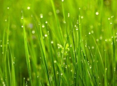 Naklejka Zielona trawa z waterdrops