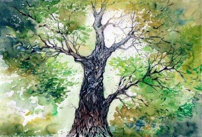 Naklejka Zielone drzewo