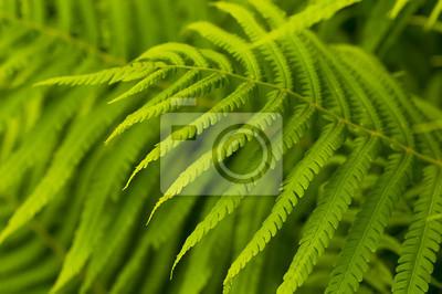 Zielone liście paproci, las tropikalny, są w kostium