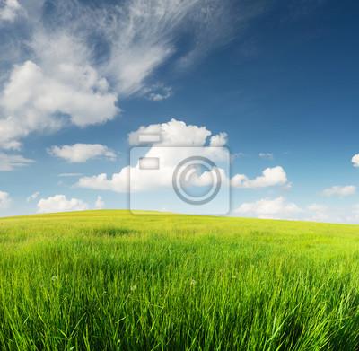 Zielone pola w dolinie górskiej. Piękny krajobraz lato