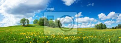 Naklejka Zielone pole z żółtym dandelions i błękitne niebo. Panoramiczny widok z trawy i kwiaty na wzgórzu w słoneczny dzień wiosny