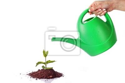 Naklejka Zielonej kapusty na białym tle