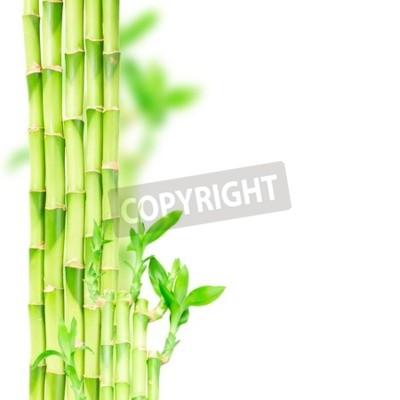 Naklejka Zielony bambusa łodygi i okap okrągłego samodzielnie na białym tle