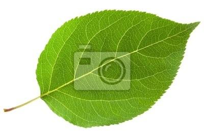 Naklejka zielony liść