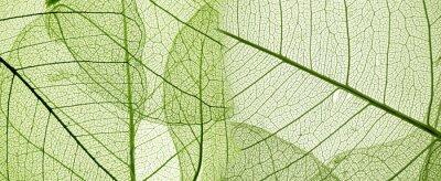 Naklejka Zielony liść tekstury