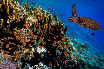 Naklejka Zielony żółw morski pływanie wzdłuż tropikalnej rafy koralowej