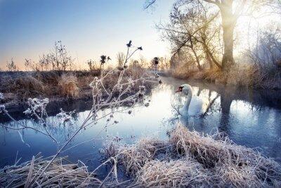 Naklejka Zima rzeka z białego łabędzia