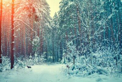 Naklejka Zimowy las pokryty śniegiem