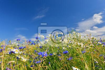 Zioła i kwiaty