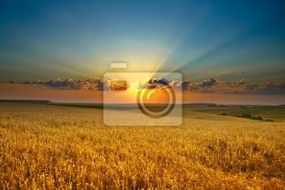 Naklejka Złote pole