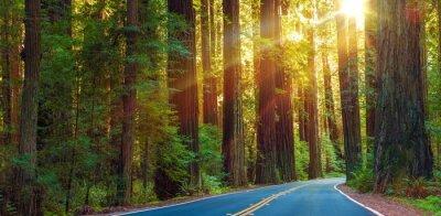 Naklejka Znani Redwood Highway