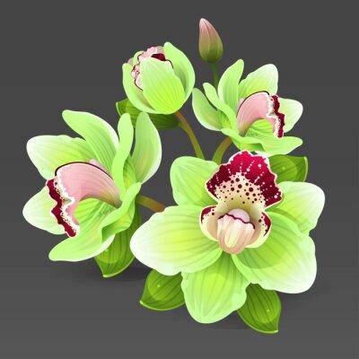 Naklejka Żółte kwiaty orchidei