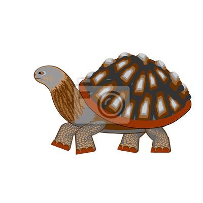 Naklejka Żółw na białym tle