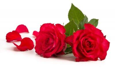 Naklejka Zwei Rosenblüten und Blütenblätter