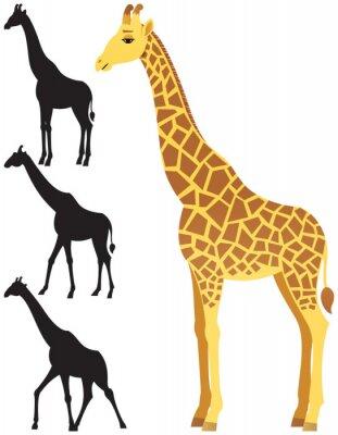 Naklejka Żyrafa / Ilustracja żyrafa na białym tle. 3 wersje sylwetka włączone. Nie przejrzystości używane. Podstawowe (liniowy) gradienty stosowane.