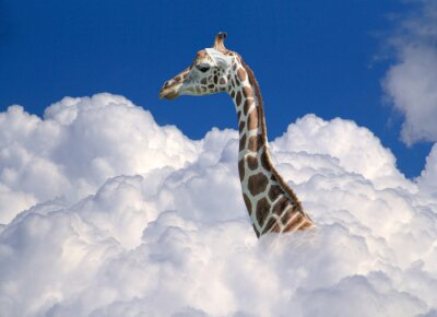 Naklejka żyrafa nad chmurami