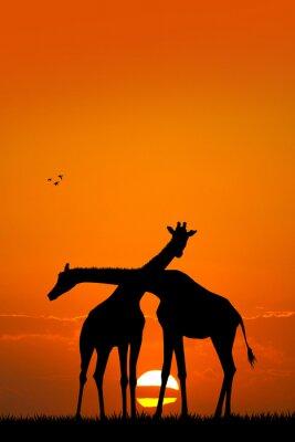 Naklejka Żyrafa para na zachodzie słońca