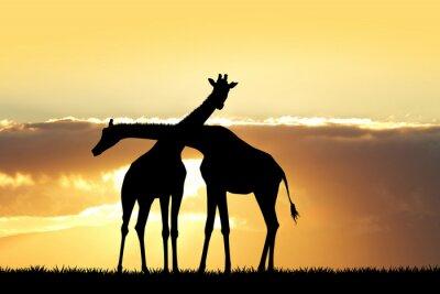 Naklejka Żyrafa sylwetka o zachodzie słońca