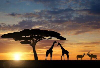 Naklejka Żyrafy z Kudu o zachodzie słońca