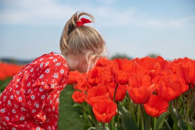 Obraz A girl sniffing tulips in a red field