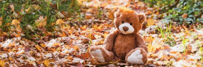 Obraz Adorable brown fluffy teddy bear toy sits on dry orange leaves pile on ground in autumn park on nice sunny day close view. Banner size for web site. back to school concept.