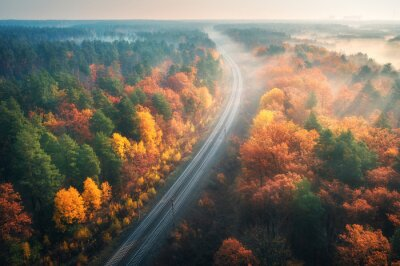 Aerial view of beautiful railroad in autumn forest in foggy sunrise. Industrial landscape with railway station, colorful trees with orange leaves, fog and sun rays. Top view of rural railway platform