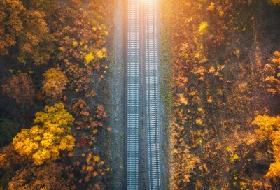 Aerial view of railroad in beautiful forest at sunset in autumn. Industrial landscape with railway station, trees with orange leaves in fall. Top view of rural railway platform. Transportation