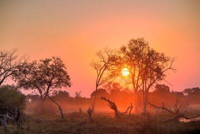 Obraz Afryka Sunset