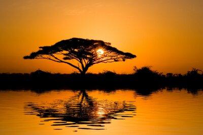 Obraz akacji o wschodzie słońca
