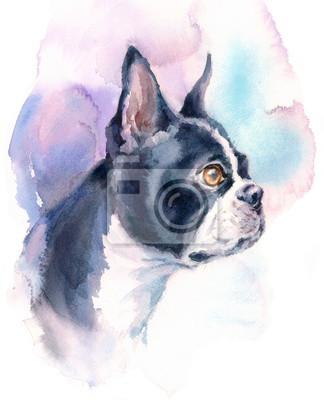 Obraz Akwarela Dog Boston Terrier Portrait - Zwierzęta Zwierzęta Ręcznie malowane ilustracji na białym tle