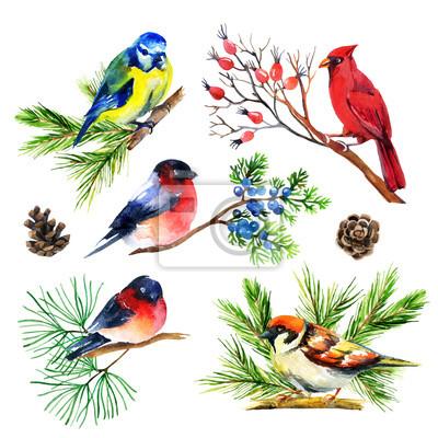 Akwarela gil, sikorki, kardynał i wróbel na gałęzi