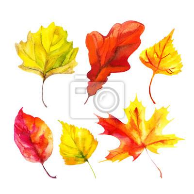Akwarela jesienny liść zestaw