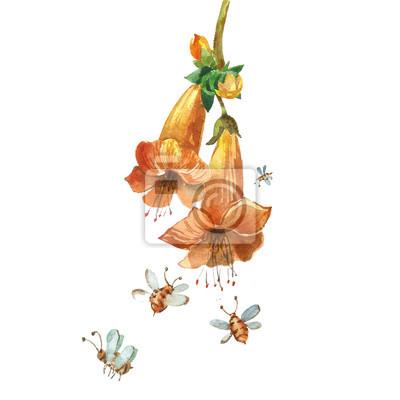 Obraz Akwarela kwiat
