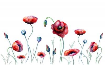 Obraz akwarela kwiaty maku