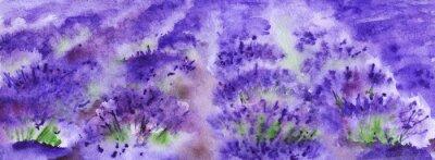 Obraz Akwarela pola lawendy Prowansja krajobrazu