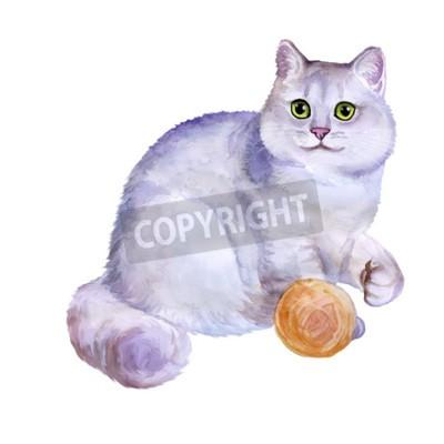 Obraz Akwarela portret british złotej szynszyli długie włosy kot odizolowane na białym tle. Wyciągnąć rękę słodki domowy zwierzak. Jasne kolory, realistyczny wygląd. Projektowanie kart okolicznościowych. Ob