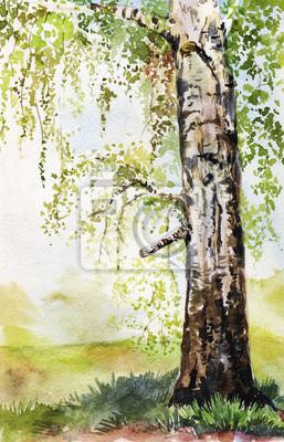 Obraz Akwarele ilustracji z brzozy