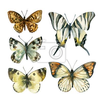 Akwarele zestaw motyl