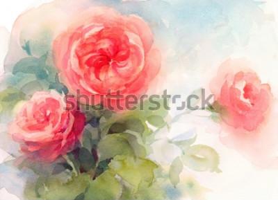 Obraz Akwareli menchii ogródu róż kwiatów tła tekstury Ręcznie Malowana Kwiecista ilustracja