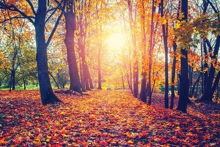 Obraz Alley in the sunny autumn park