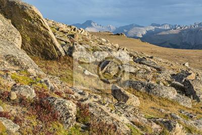 Alpejska fauna wśród głazów na szlaku Ute