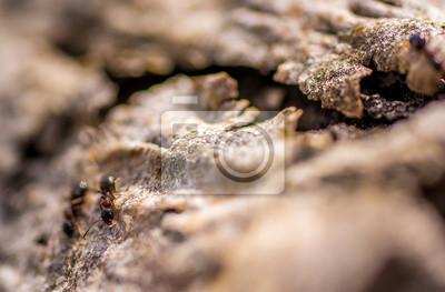 Ameisen 1