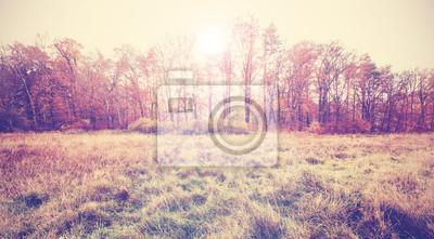 Archiwalne zdjęcie filtrowane pola jesienią.