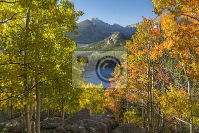 Aspen Color w Rocky Mountain National