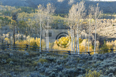 Aspen Ridge i drewniany płot