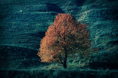 Obraz autumn background colorful trees in landscape