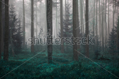 Obraz  autumn forrest  in a foggy morning